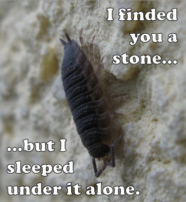I finded you a stone but i sleeped under it alone.